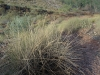 09-Ellery_Creek-Spear_grass