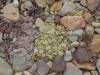 07-Ochre_Pits-Small_pebbles