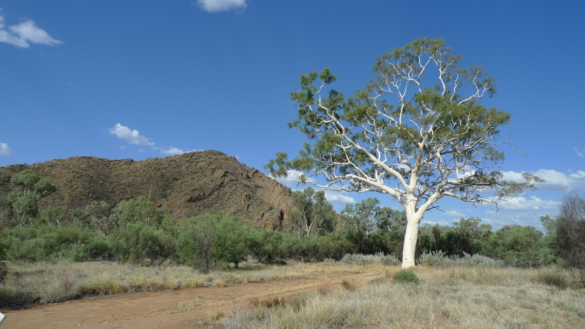 01-Trephina-Gorge-Giant-Ghost-Gum