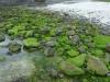 06-Green-Island-Mossy-Stones