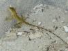 03-Green-Island-Prison-Gecko