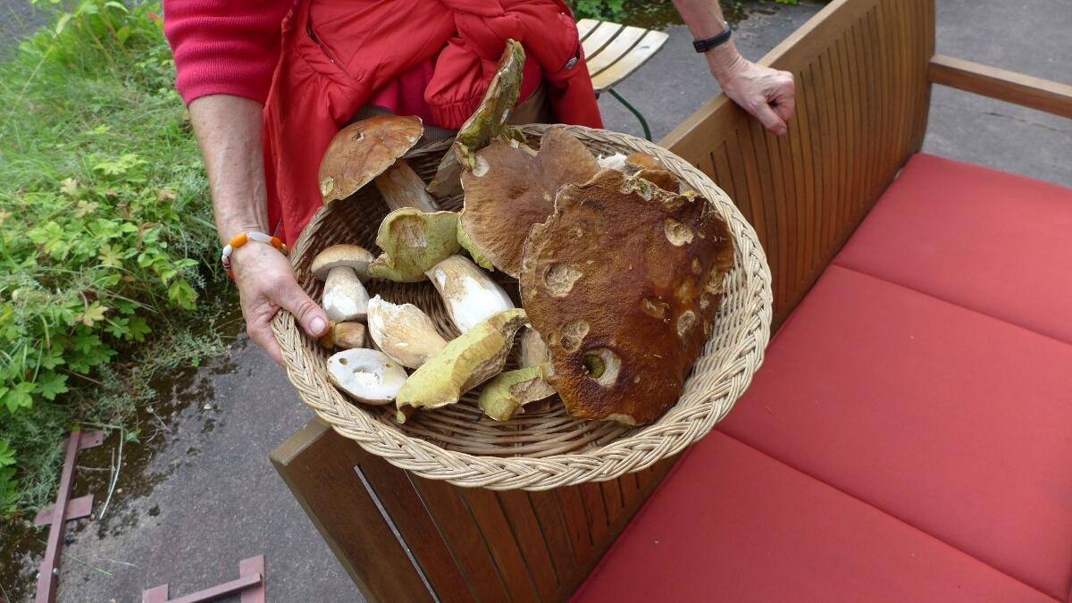 02-Mushroom_hunting-Steinpilz
