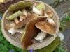 06-Mushroom_hunting-Porcini