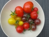 03-tomatos-chilis-first-harvest