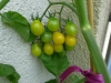 04-tomatos-chilis-yellow-date-tomatos