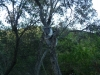 04-blanket-bay-little-koala
