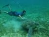 14-derawan-snorkeling