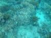 23-derawan-snorkeling-fish