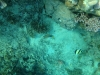 25-derawan-snorkeling-fish