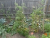 03-garden-view