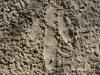 06-grampians-emu-tracks