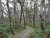 14-gow-eucalypt_forest