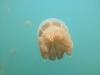 08-kakaban-jellyfish