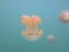 10-kakaban-jellyfish