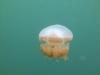 12-kakaban-jellyfish