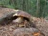08-mushroom