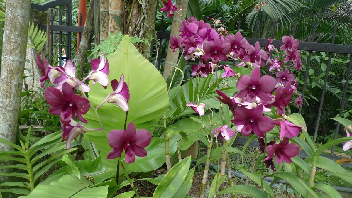 Kuala Lumpur – Orchid gardens | eat code see