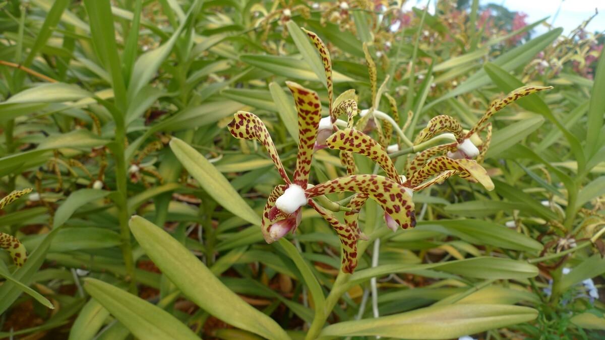 08-kl-orchid-garden