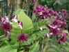 01-kl-orchid-garden