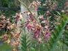 02-kl-orchid-garden