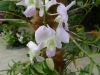 03-kl-orchid-garden