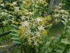 04-kl-orchid-garden