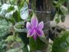 05-kl-orchid-garden