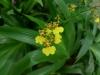 06-kl-orchid-garden