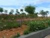 07-kl-orchid-garden