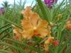 09-kl-orchid-garden