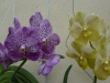 11-kl-orchid-garden