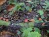06-kutai-mushrooms