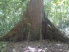 08-kutai-tree