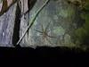 11-kutai-spider