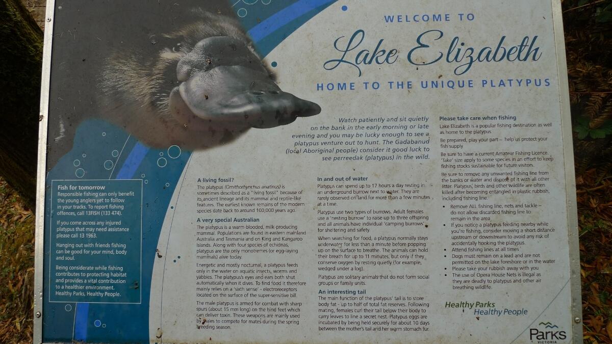 05-lake-elizabeth-platypus