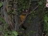 01-melbourne-possums