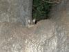 03-melbourne-possums