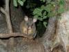 04-melbourne-possums
