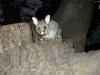 05-melbourne-possums