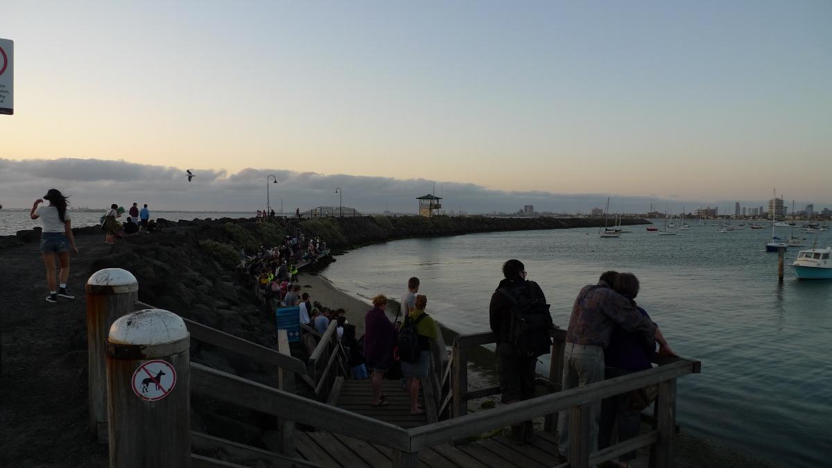 Melbourne Penguins At The St Kilda Pier Eat Code See