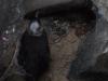 03-melbourne-st-kilda-penguins-moulding