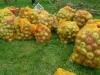 03-200kg-apples