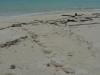 04-sangalaki-turtle-hatching-traces