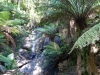 04-tarra-bulga-rainforest-waterfall