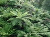 07-tarra-bulga-ferns-everywhere