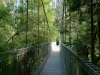 08-tarra-bulga-suspension-bridge