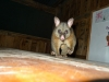 09-tarra-bulgarmost-naughty-possum-ever