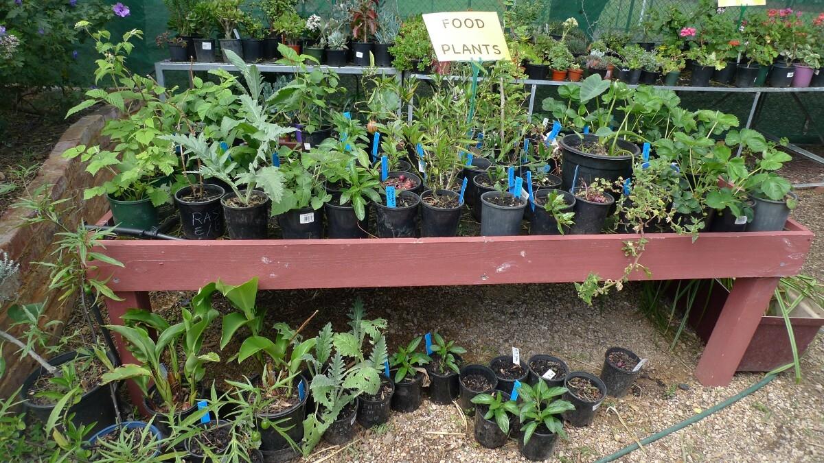 02-food-plants