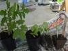 05-all-seedlings
