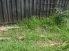 06-wild-veggie-patch